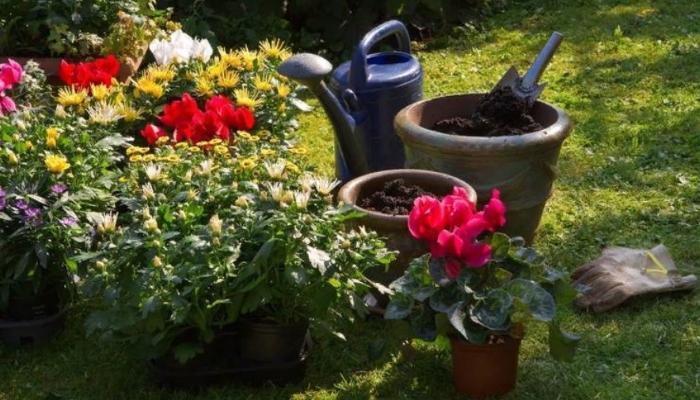 12 лучших органических удобрений для растений
