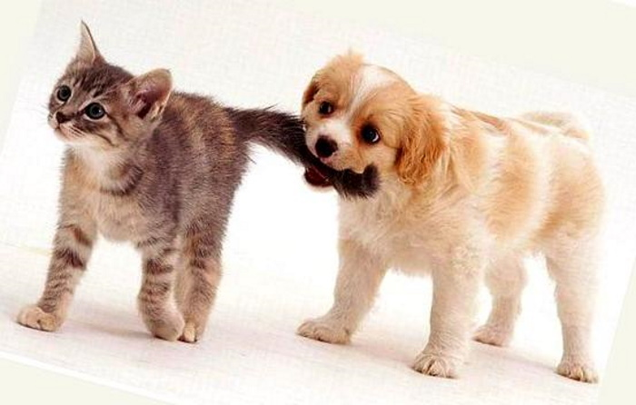 К чему может привести дерганье кота за хвост
