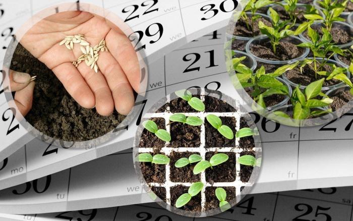 Лунный календарь для садоводов и огородников на 2021 год