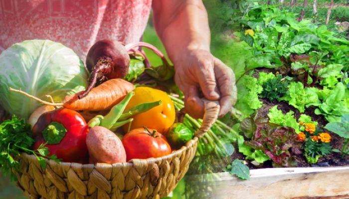 Очевидные преимущества садово-огородных работ для пожилых людей