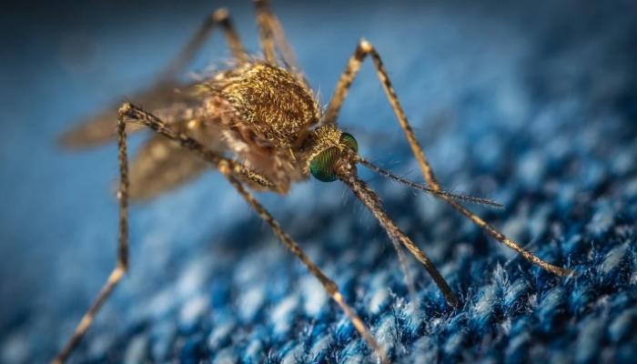 Как оказать себе и близким первую помощь при укусах насекомых
